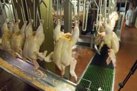 food industry secrets