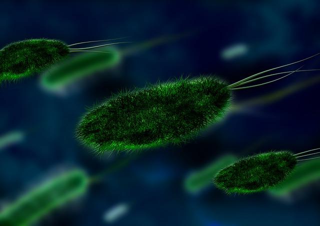 gut bacteria alzheimer's