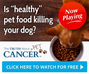 pet cancer