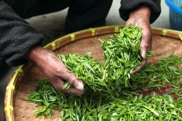 Tea Academy – Everything You Didn't Know About Tea